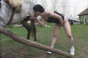 سكس حصان HD